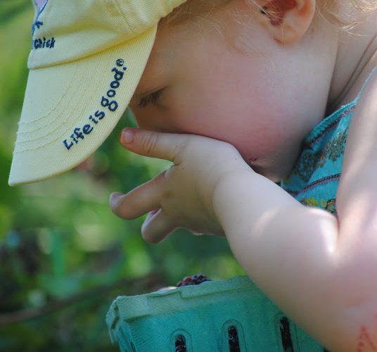 baby picking blackberries
