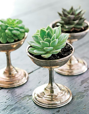 succulents {Pantone Color of the Year: Emerald}