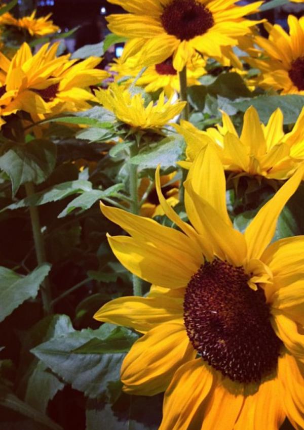Inspiration from the Philadelphia Flower Show