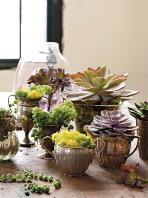Succulents can thrive in almost any container