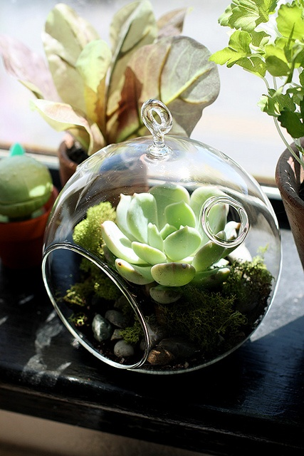 So many options of glassware for your succulents