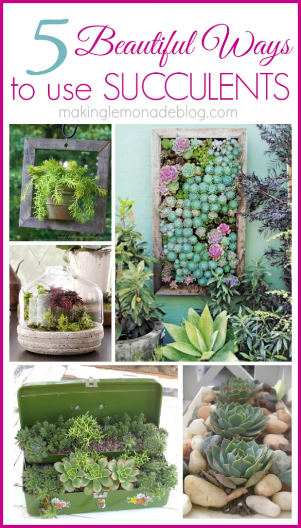 5 gorgeous ways to use succulents; I love all the inspiration photos! #succulents