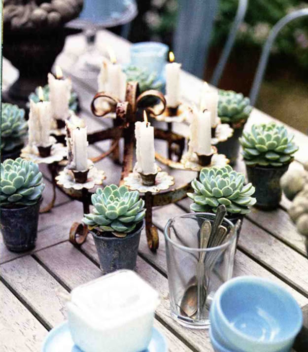 Individual succulents as tablescape