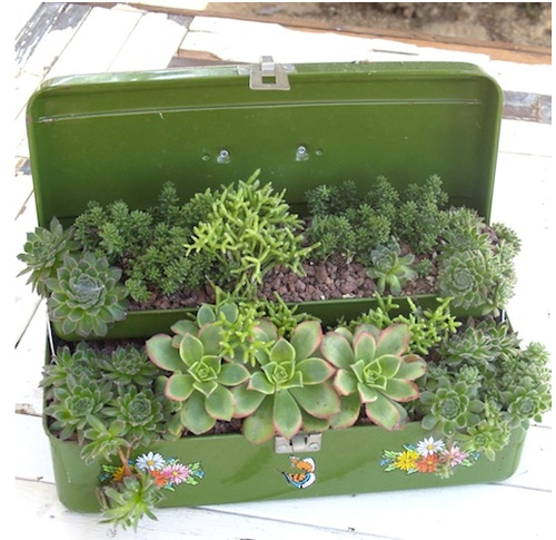 Unique containers are a fun way to display succulents