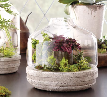 Glass containers and terrariums are great options