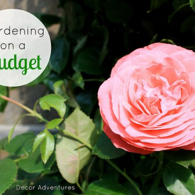 7 Tips for Gardening on a Budget