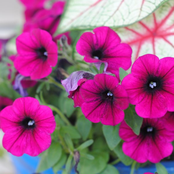 5 Tips for Perfect Planters