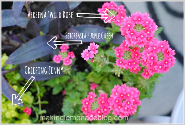 What to Plant in Flower Planters
