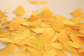 Ginkgo_notes