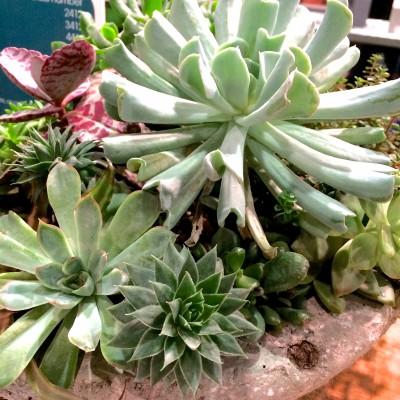 Garden Inspiration: Philadelphia Flower Show 2014