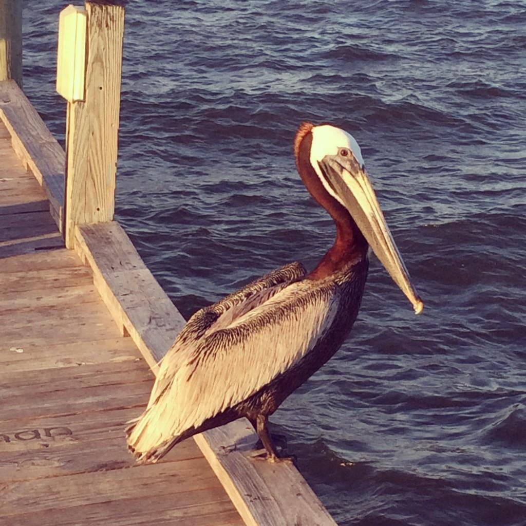 Things to Do in Anna Maria Island, Florida #travel #Florida