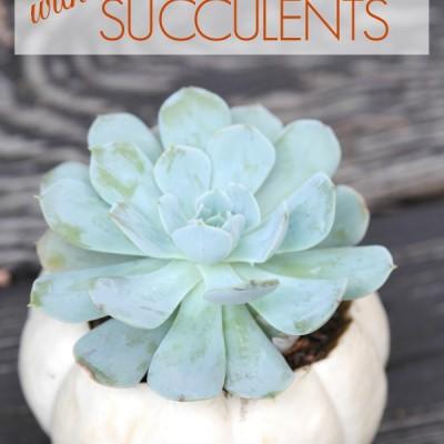 Fall Decor Idea: Succulent Pumpkins