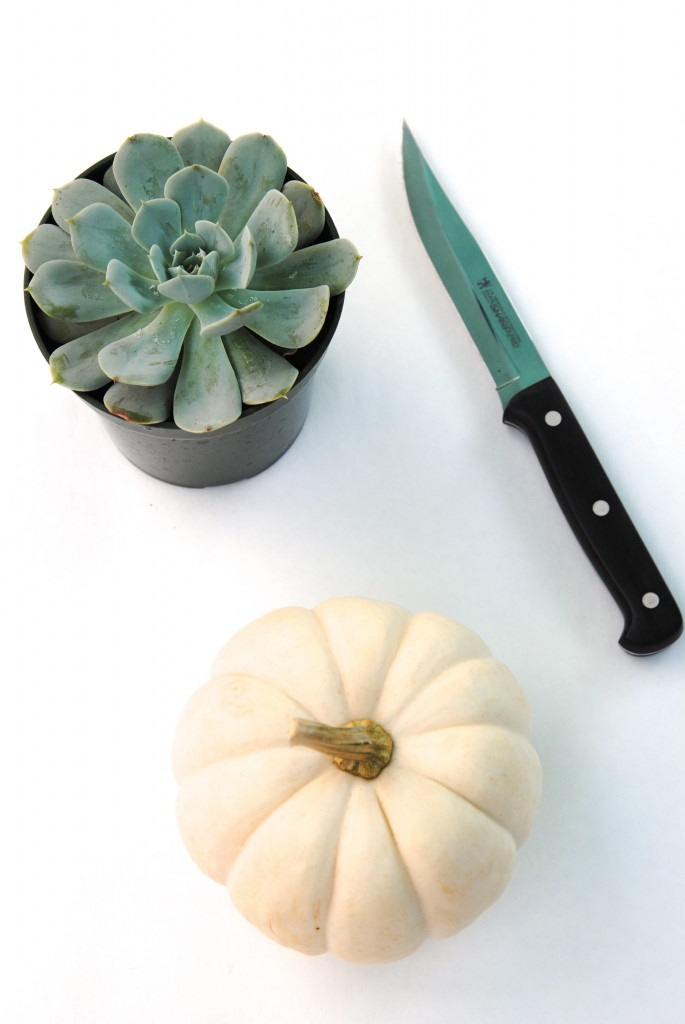 5 Minute Fall Decor Idea: succulent pumpkin planters! Fall decor doesn't need to be fussy, make it easy and beautiful with these easy decor ideas!
