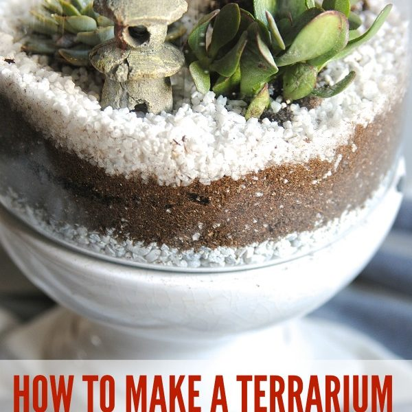 Terrariums and indoor succulent gardens are beautiful and have easy upkeep; check out these 3 quick steps for making them!