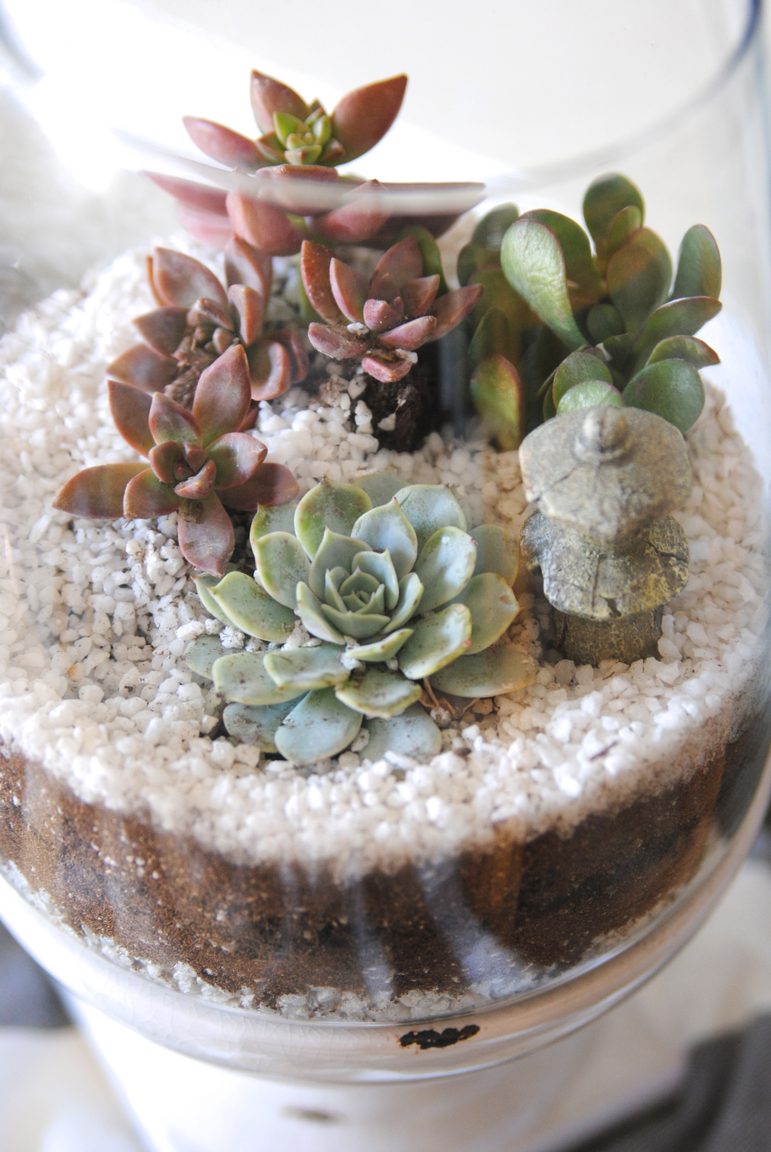 How To Make A Terrarium In 3 Easy Steps Making Lemonade