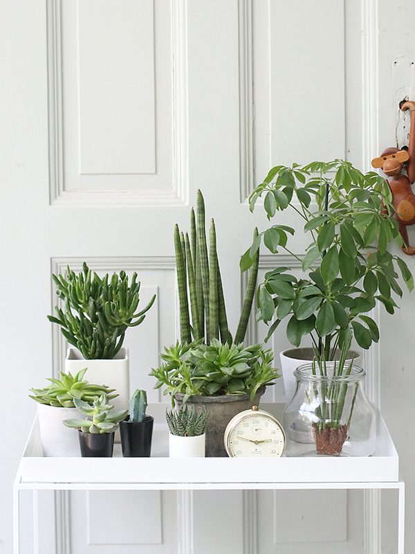 gorgeous design trends for 2016, this is one of my favorites- plant gangs!