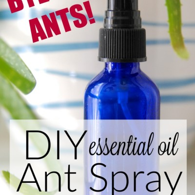 get rid of ants naturally diy ant spray. Black Bedroom Furniture Sets. Home Design Ideas