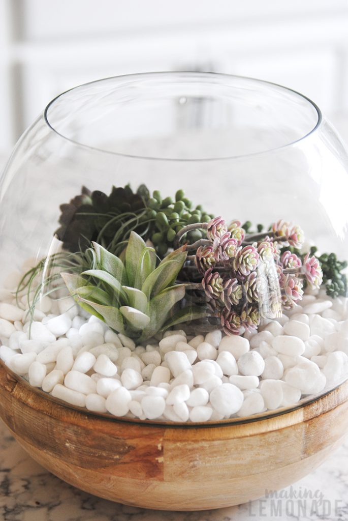 beautiful terrarium with succulents