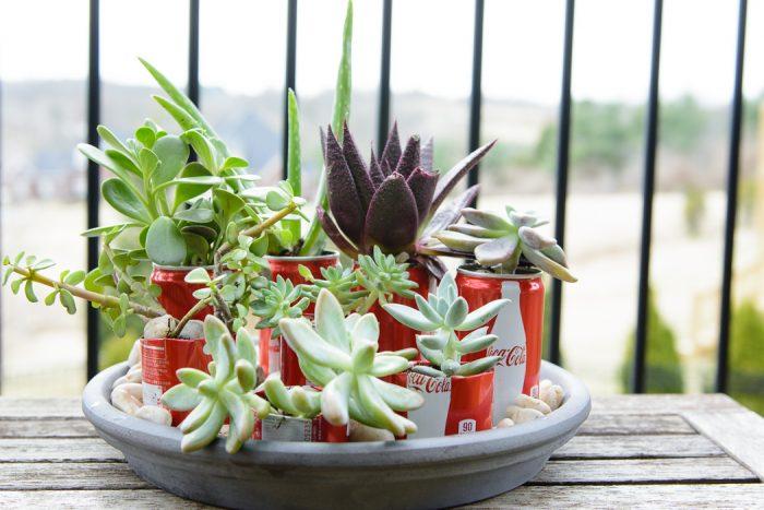 coke can succulent planters