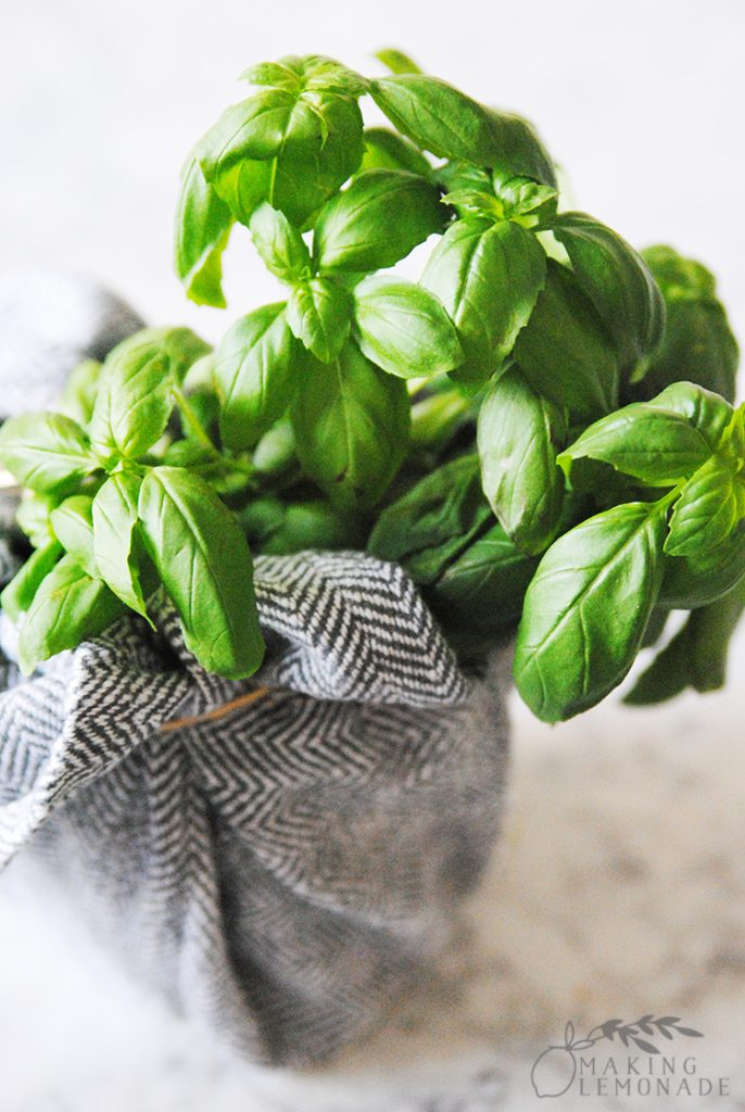 wrapped basil plant