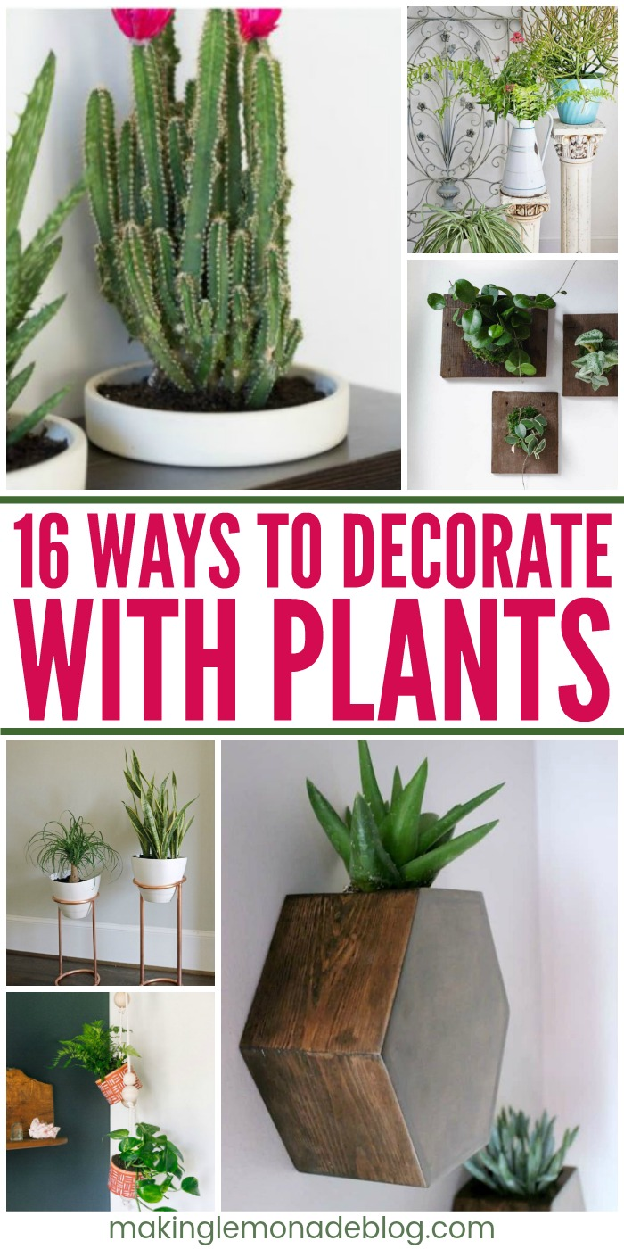 16 Interesting Ways To Decorate With Plants Making Lemonade
