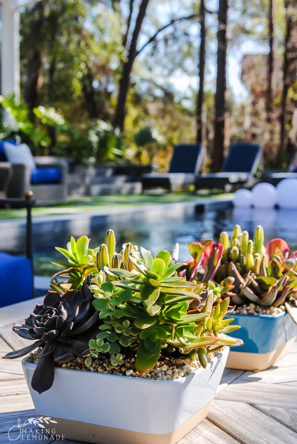 pool and succulents