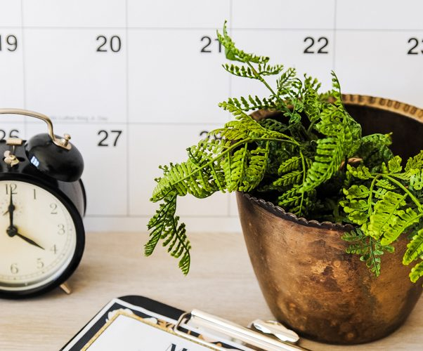 calendar with plant and clock