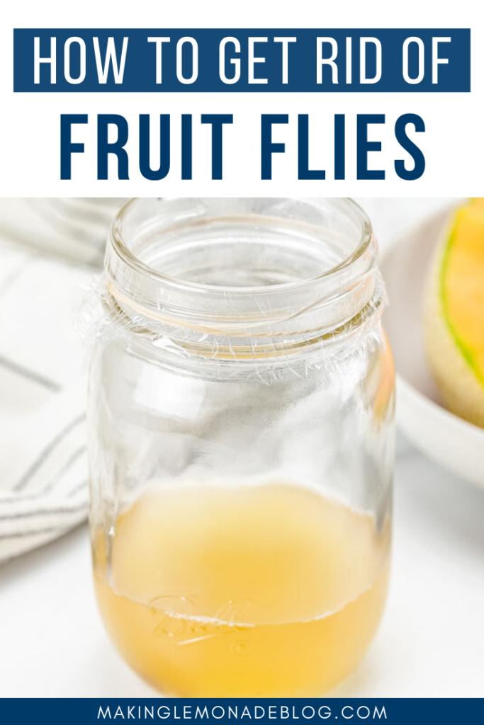 DIY homemade fruit fly trap pin