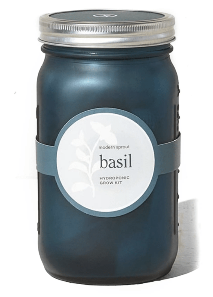 basil growing kit in mason jar