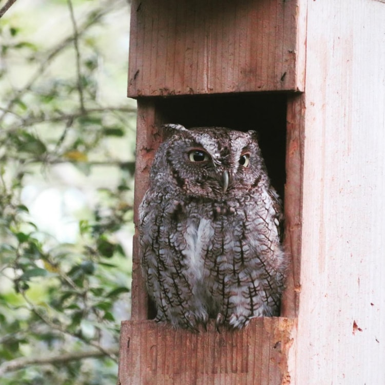 Owl Reach owl box