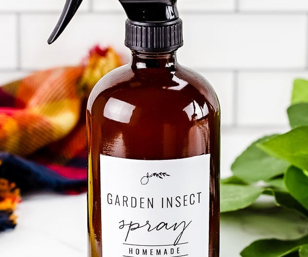 homemade garden insect repelling spray in bottle