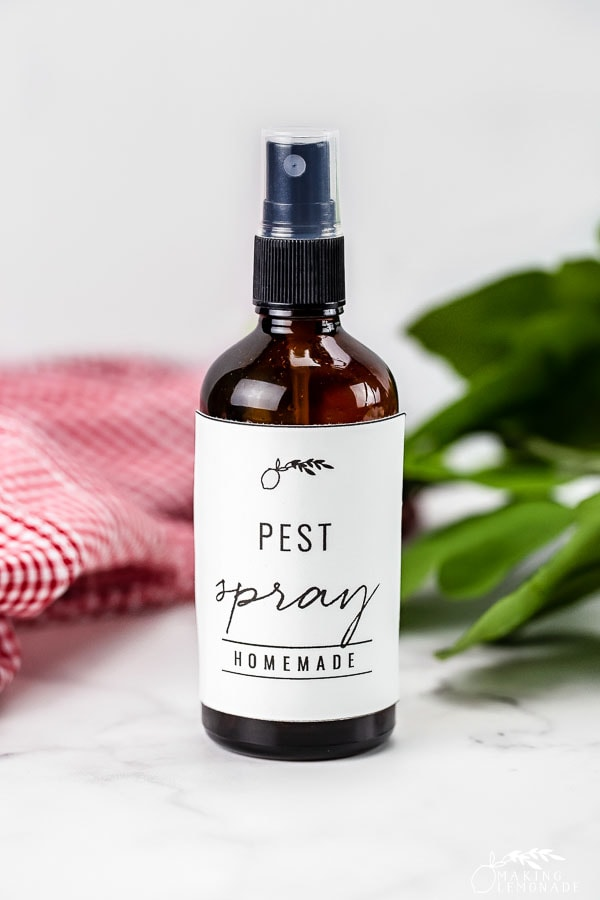 bottle of homemade pest spray