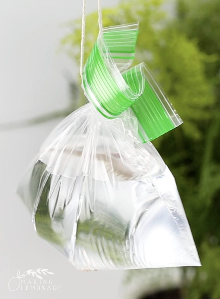A bag of water hung up to repel flies
