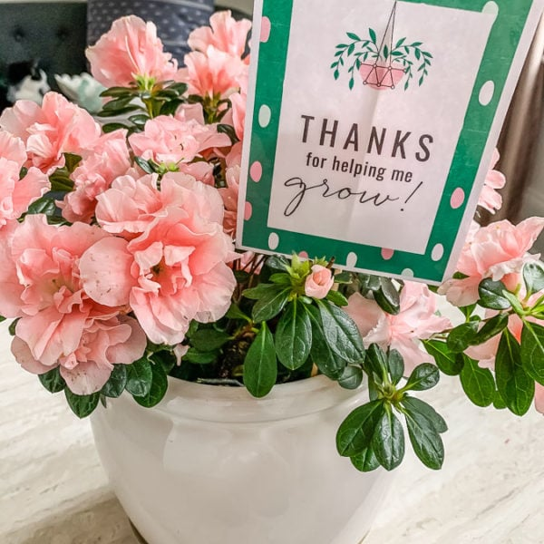 printable teacher appreciation gift tag in planter