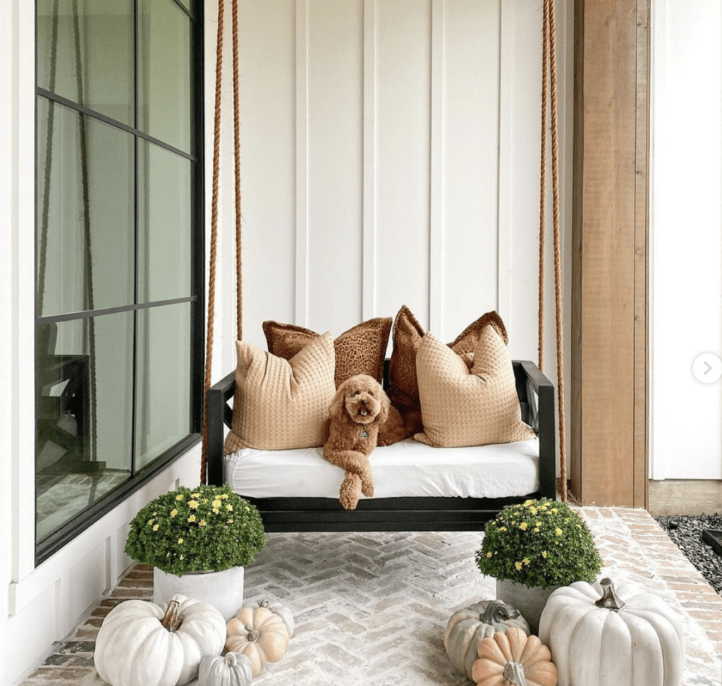 dog on porch with pumpkins